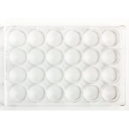 6/ 12/ 24 Well Cell Culture Plate TC